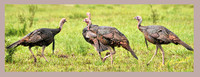 dodged the bullet WILD-TURKEY copy 2